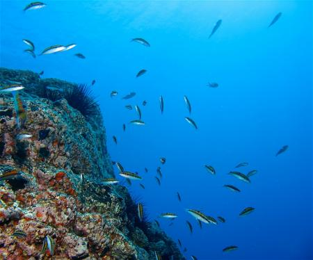 Kanarische Insel/La Gomera - Punta Gilla / San Sebastian,Spanien