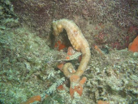 Elite Divers,Ilha Grande,Brasilien