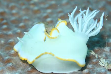 Pintuyan Dive Resort,Pintuyan,Southern Leyte,Philippinen