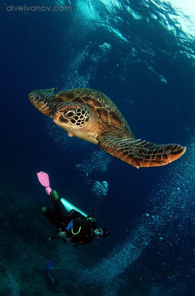 Tauchen in Apo Island, Wellbeach Dive Resort Maluay Negros Oriental, Philippinen