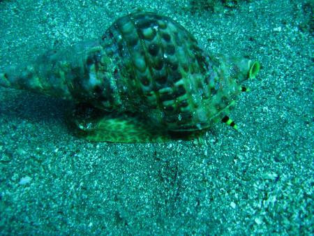 Hippocampos Dive Center,Bali,Kreta,Griechenland