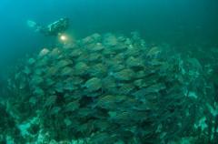 Extra Divers,Salalah,Oman