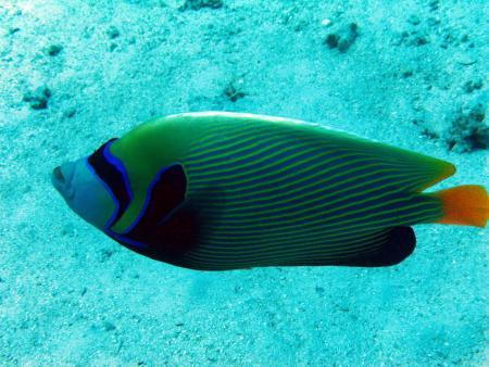 Ilios Dive Club & Aqua Center,Hurghada,Ägypten