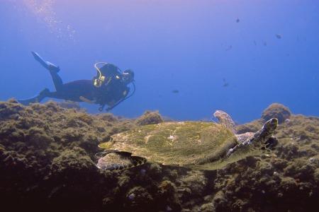 Buceo 7mares,Las Canteras,Las Palmas de G.C.,Kanarische Inseln,Spanien