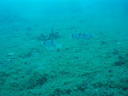 Diving Pelion,Horto,Pelion,Griechenland