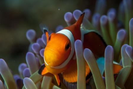 The Three P Holiday & Dive Resort / Ducks Diving Romblon,Philippinen