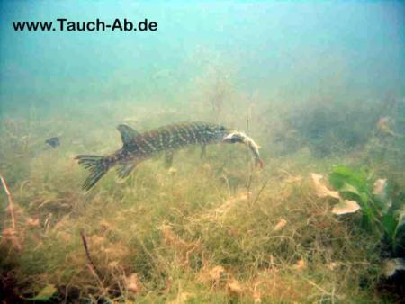 Tauchbasis Stechlin,Neuglobsow / Brandenburg,Brandenburg,Deutschland
