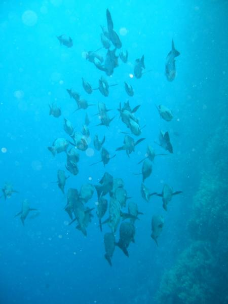 Habilli Soraya (St. John´s),St. John´s Reef - Habili Ali,Ägypten