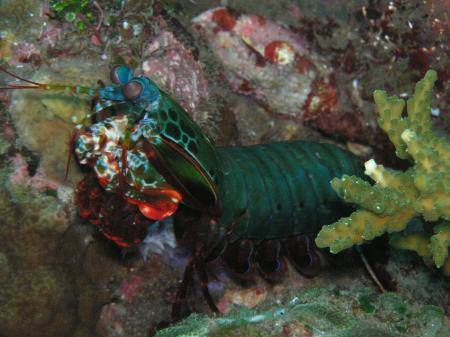 Gani-Bali-Dive,Indonesien