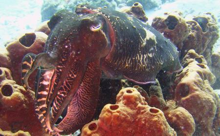 Lagona Divers - Komodo,Allgemein,Indonesien