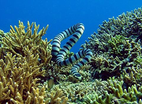 Ataouro Island/Big Fish Point, Ataouro Island,Osttimor