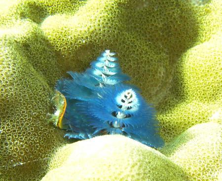 Reef Encounter,Cairns,Australien