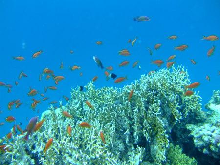 Viva Sub,Fantazia Resort,Marsa Alam,Marsa Alam und südlich,Ägypten