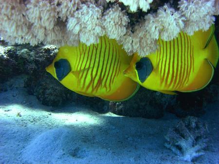 Colona Divers,Magawish Resort,Hurghada,Ägypten