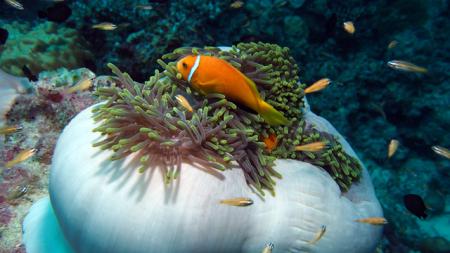 Süd-Male-Atoll,Malediven