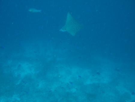 Veligandu,Malediven