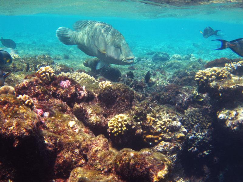Fotos Fantazia Resort Hausriff Halg Dawoud - Alle Bilder sind beim Schnorcheln entstanden!, Hausriff Fantazia Resort Marsa Alam - Halg Dawoud,Ägypten