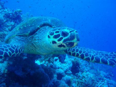 C Fun Divers,Iberotel Palace,Sharm el Sheikh,Sinai-Süd bis Nabq,Ägypten