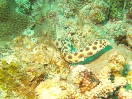 Orca Diveclub Merville,Grand Baie,Mauritius
