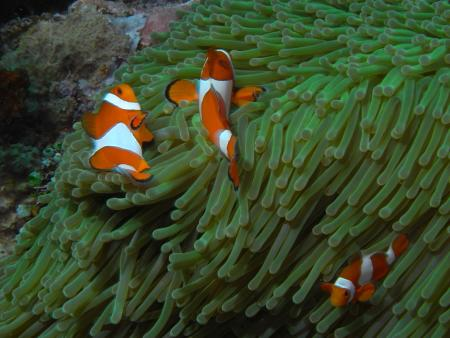 Gangga Island,Indonesien