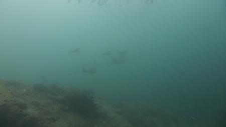 M/Y Neptune Warrior,Seychellen