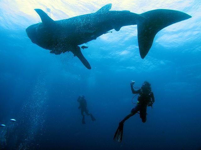Ronin Dive, Koh Hai, Thailand, Andamanensee