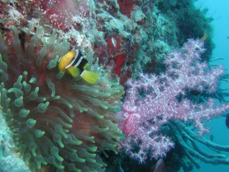 Ellaidhoo,Ari Atoll,Alfons Straub Dive & Sail,Malediven