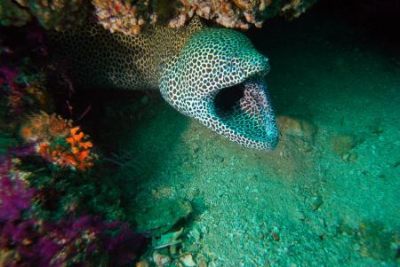 7 Seas Divers,Khorfakkan,Vereinigte Arabische Emirate