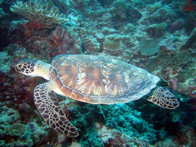 Kuramathi - Rasdhoo Atoll, Kurumathi - Rasdhoo Atoll (Ross Atoll),Malediven