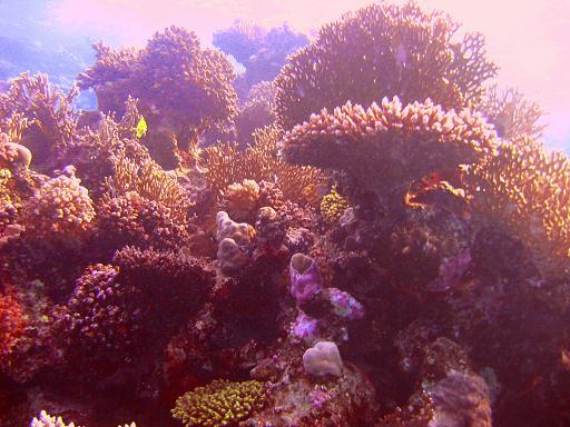 Safaga - Coral Garden, Coral Garden,Ägypten