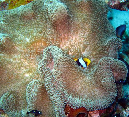 Dolphin Bay Divers,Vanua Levu,Fidschi