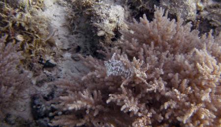 Alad Marine Sanctuary,Romblon,Philippinen