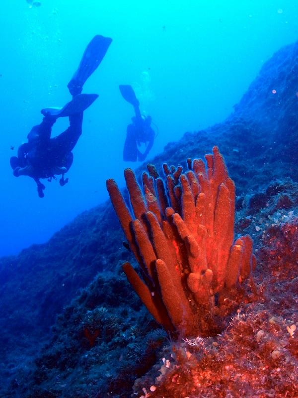 Koralle, Mittelmeer, Beluga Kerveli Village, Samos, Griechenland