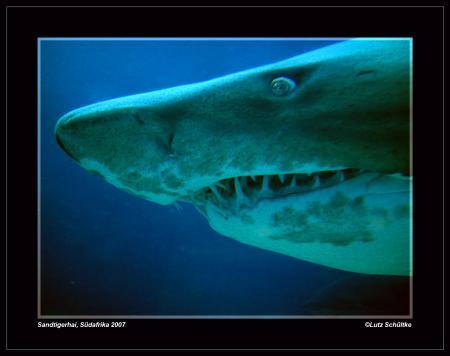 Quo Vadis Dive Centre,Südafrika