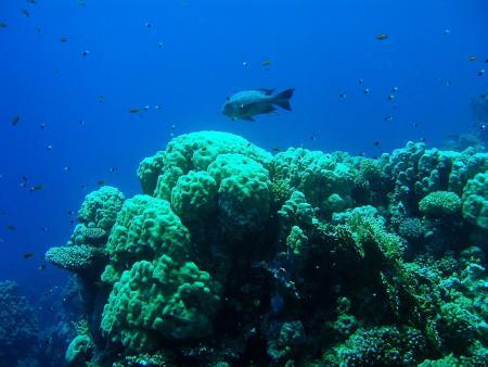 Mangrove Bay Resort,Ägypten,Mangrove Bay Hotel