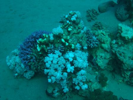 Nemo Dive Club,Safaga,Ägypten