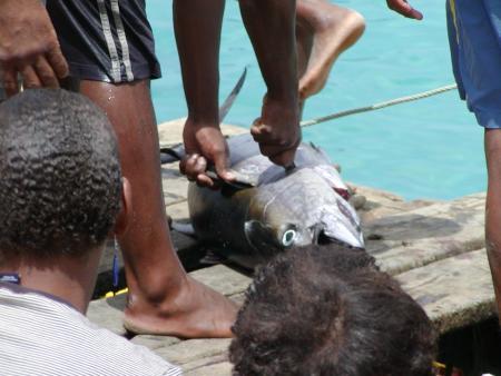 Pro Atlantic Diving Center,Sal,Murdeira,Kap Verde