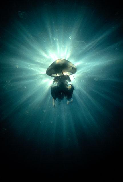 Black Sea Underwater, Schwarzes Meer,Bulgarien