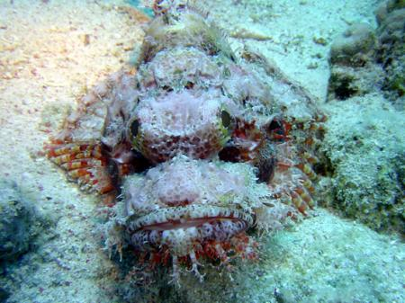 MARSA ALAM NÖRDLICH, Bavaria Blue Diving,Hurghada,Marsa Alam - allgemein,Ägypten