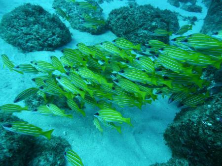 Diverland Mauritius,Flic en Flac,Mauritius