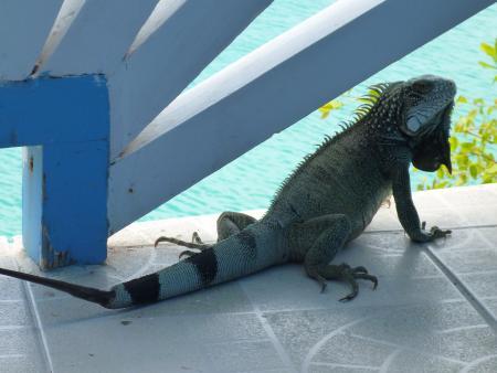 Go West Diving Curacao,Curaçao,Niederländische Antillen