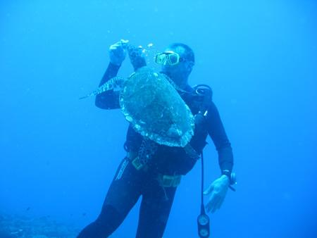 Bathys Diving Moorea,Französisch-Polynesien