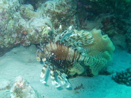 Extra Divers,Marina Lodge,Port Ghalib,El Quseir bis Port Ghalib,Ägypten