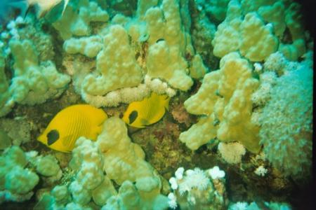 Coral Garden,Ägypten