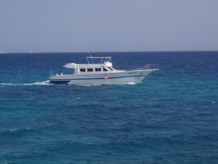 Red Sea Bruce,Hurghada,Ägypten