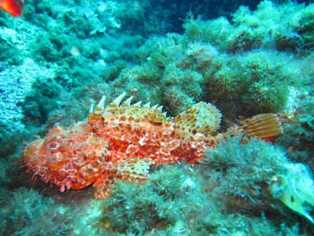 East Coast Divers,Porto Colom,Balearen,Spanien