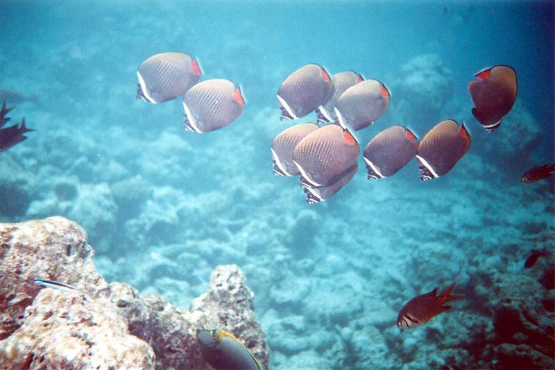 Lhaviyani Atoll - Kuredu, Kuredu,Malediven