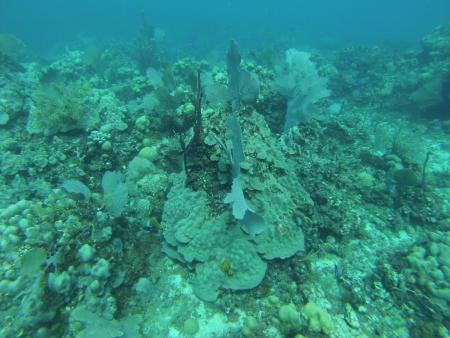 Ultra Marine Divers,Punta Cana,Dominikanische Republik
