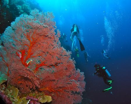 Siaes Corner,Palau