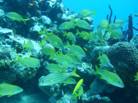 Caribbean Divers,Boca Chica,Das Dritte Riff,Dominikanische Republik